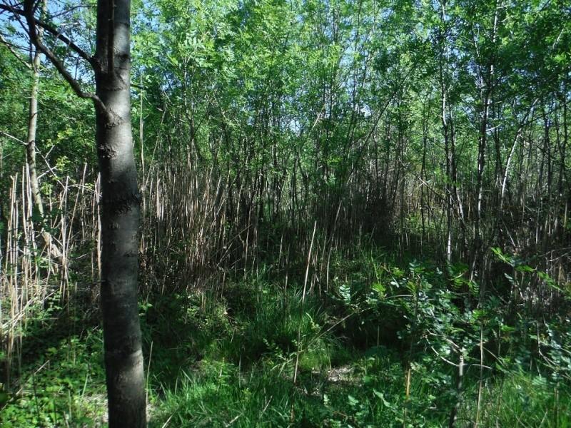 JdB de 4 hectares de pâtures dans le SUD : Timide reprise après 8 mois de sécheresse Dscf3717