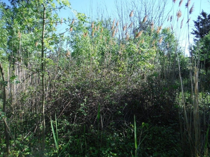 JdB de 4 hectares de pâtures dans le SUD : Timide reprise après 8 mois de sécheresse Dscf3718