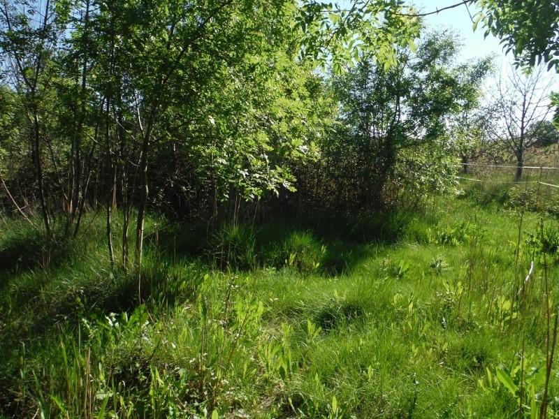 JdB de 4 hectares de pâtures dans le SUD : Janvier à la diète... + expérimentation Dscf3719