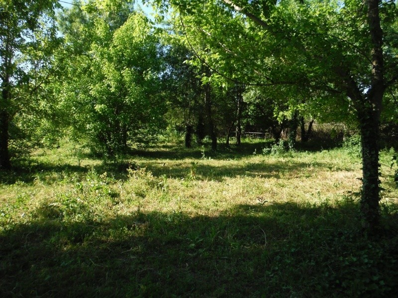 JdB de 4 hectares de pâtures dans le SUD : Timide reprise après 8 mois de sécheresse Dscf3720