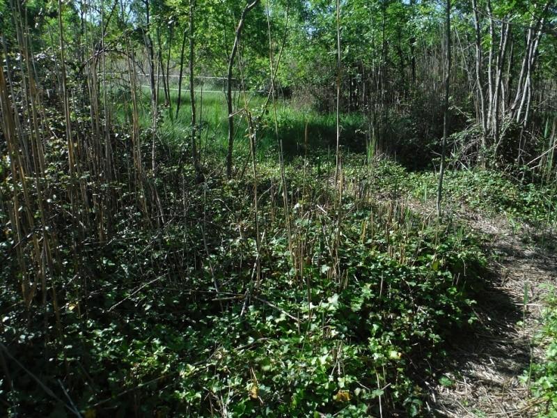 JdB de 4 hectares de pâtures dans le SUD : Janvier à la diète... + expérimentation Dscf3721