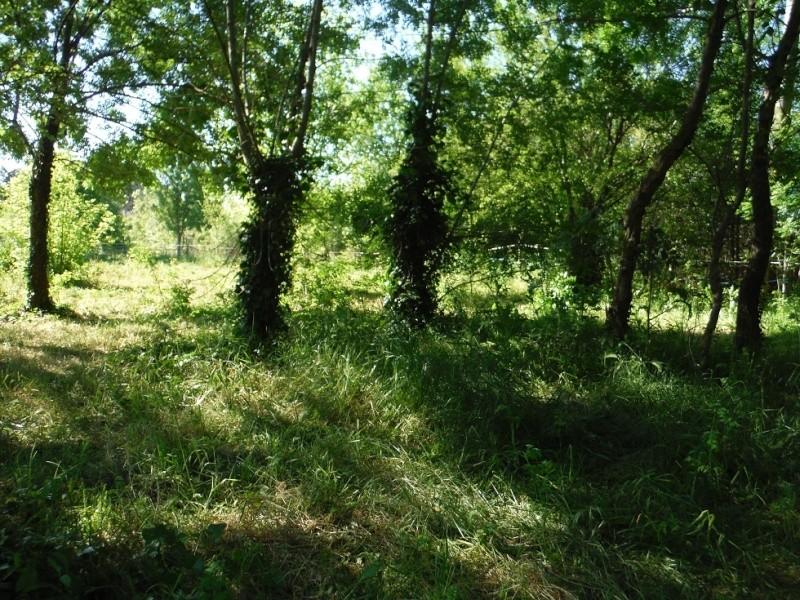 JdB de 4 hectares de pâtures dans le SUD : Janvier à la diète... + expérimentation Dscf3722
