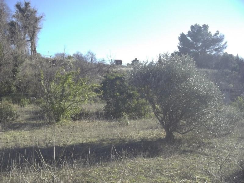 JdB de 4 hectares de pâtures dans le SUD : Timide reprise après 8 mois de sécheresse Janv2010