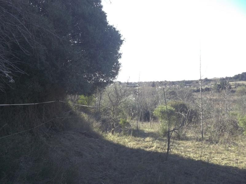 JdB de 4 hectares de pâtures dans le SUD : Janvier à la diète... + expérimentation Janv2011
