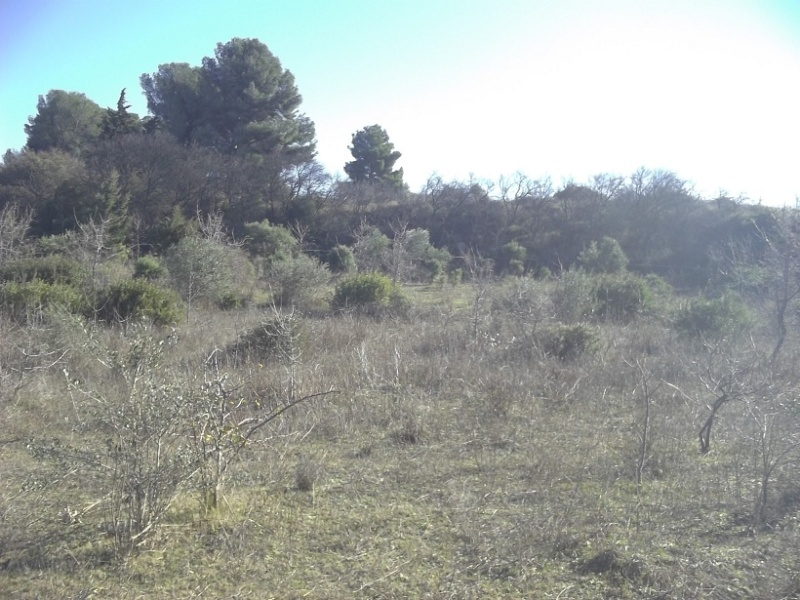 JdB de 4 hectares de pâtures dans le SUD : Timide reprise après 8 mois de sécheresse Janv2012