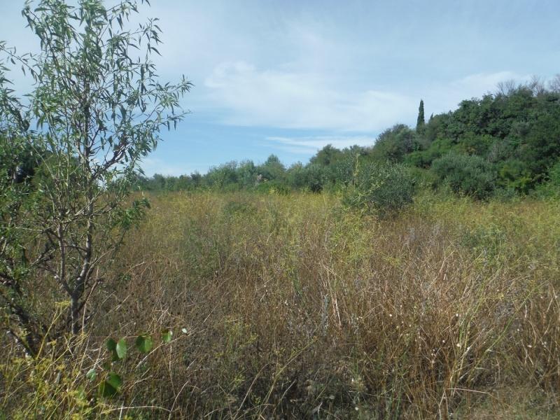JdB de 4 hectares de pâtures dans le SUD : Timide reprise après 8 mois de sécheresse Pature10