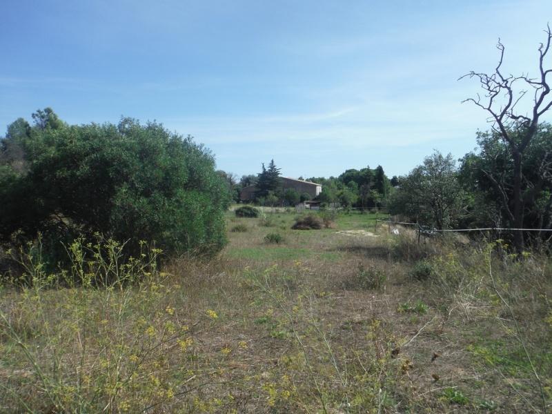 JdB de 4 hectares de pâtures dans le SUD : Timide reprise après 8 mois de sécheresse Pature11