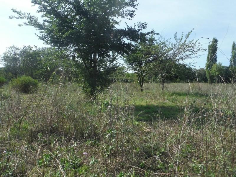 JdB de 4 hectares de pâtures dans le SUD : Timide reprise après 8 mois de sécheresse Pature12
