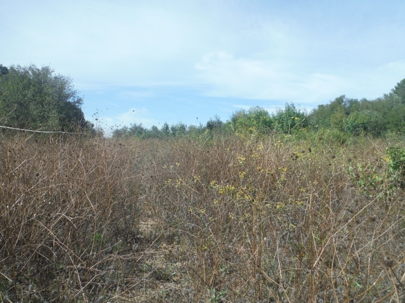 JdB de 4 hectares de pâtures dans le SUD : Timide reprise après 8 mois de sécheresse Pature13