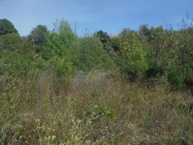 JdB de 4 hectares de pâtures dans le SUD : Timide reprise après 8 mois de sécheresse Pature14