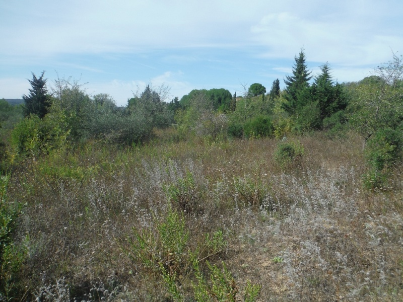 JdB de 4 hectares de pâtures dans le SUD : Janvier à la diète... + expérimentation Pature15