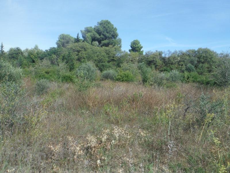 JdB de 4 hectares de pâtures dans le SUD : Timide reprise après 8 mois de sécheresse Pature16