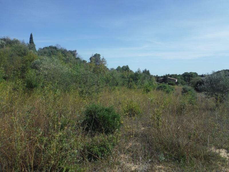 JdB de 4 hectares de pâtures dans le SUD : Timide reprise après 8 mois de sécheresse Pature17