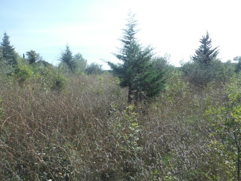 JdB de 4 hectares de pâtures dans le SUD : Timide reprise après 8 mois de sécheresse Pature18