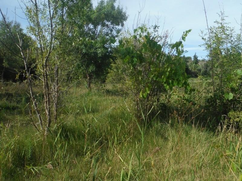 JdB de 4 hectares de pâtures dans le SUD : Janvier à la diète... + expérimentation Pature19