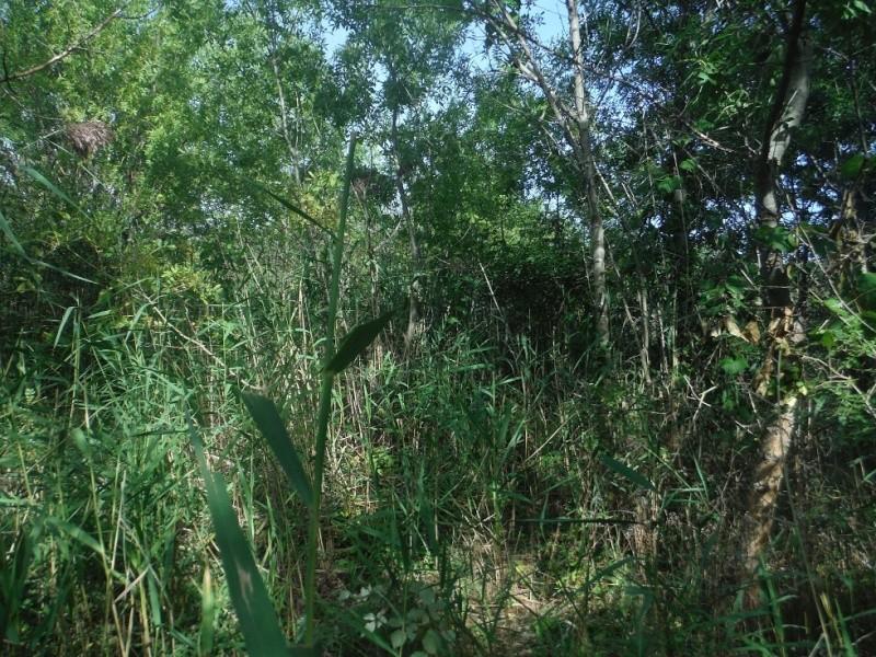 JdB de 4 hectares de pâtures dans le SUD : Timide reprise après 8 mois de sécheresse Pature20
