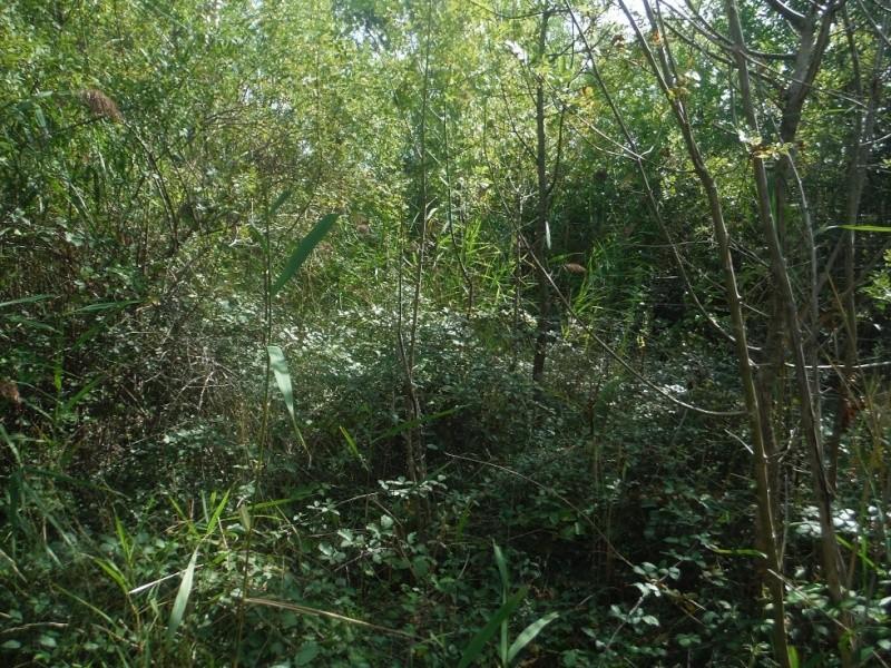 JdB de 4 hectares de pâtures dans le SUD : Timide reprise après 8 mois de sécheresse Pature21