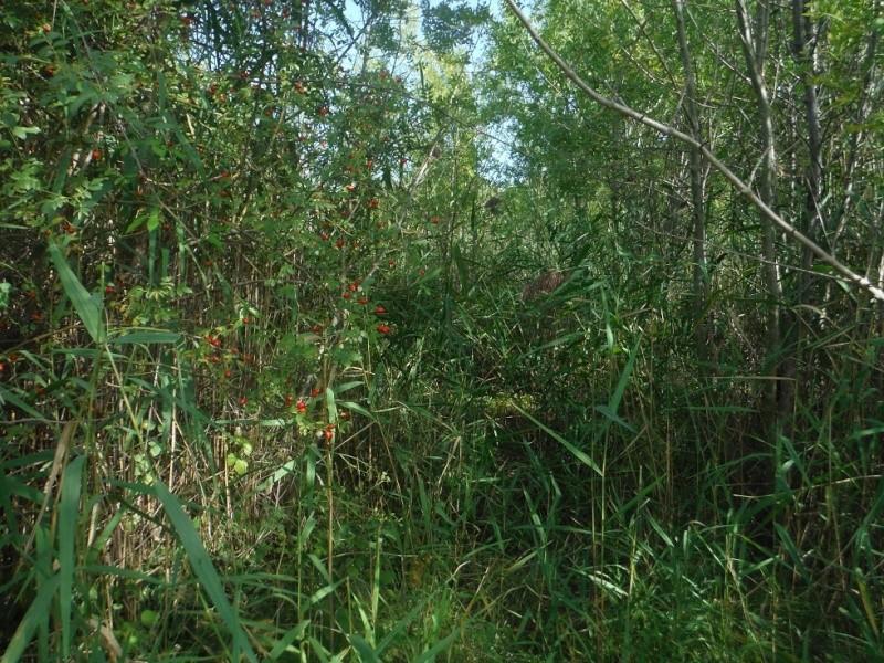 JdB de 4 hectares de pâtures dans le SUD : Janvier à la diète... + expérimentation Pature22