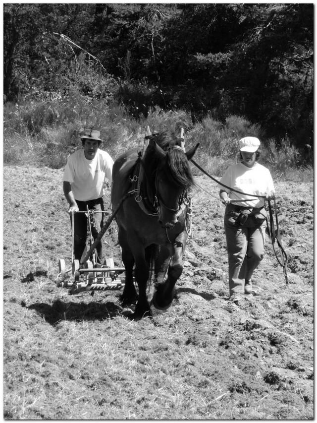 Thème de Janvier : le cheval au travail - Page 4 Beatri10