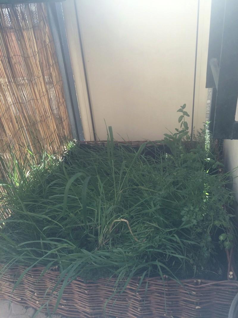 Un jardin pour les rats Jardin10