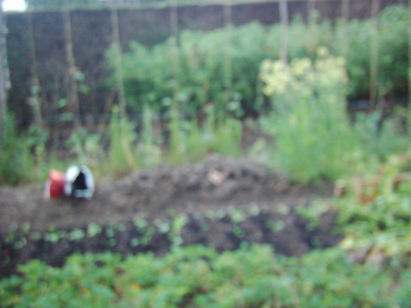 The mega bust up - affectiing the garden Dsci0410