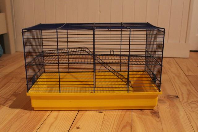 Petite cage de quarantaine (21) Img_2013