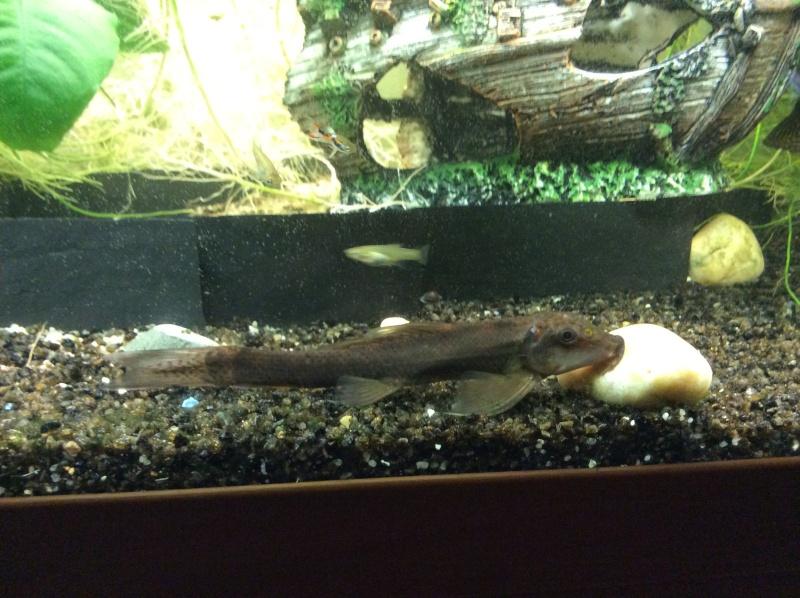 Quel est ce poisson? Image10