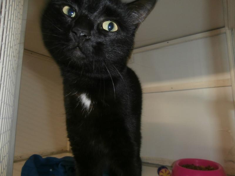 THIRION (chat noir presque aussi beau que tigre!) P4064013