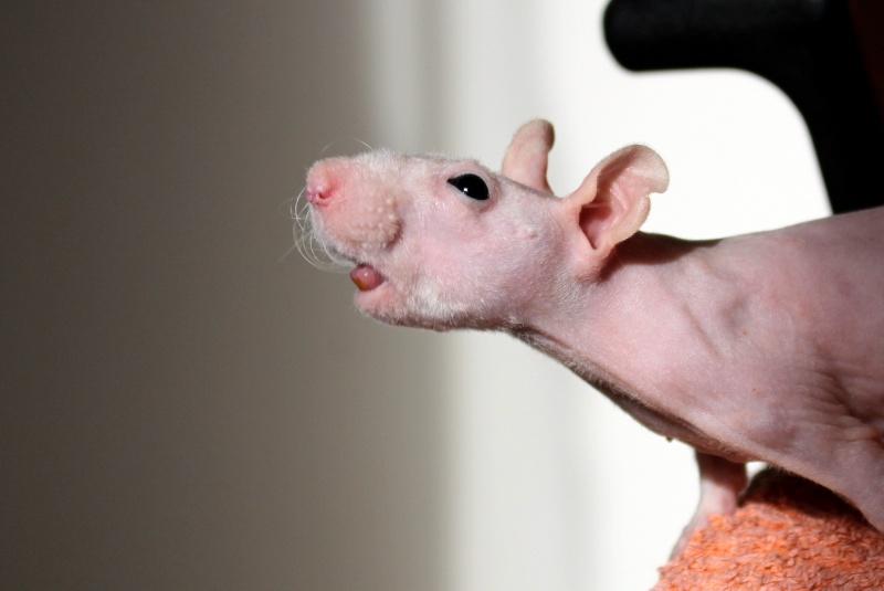 Les ratons de Random Img_8111