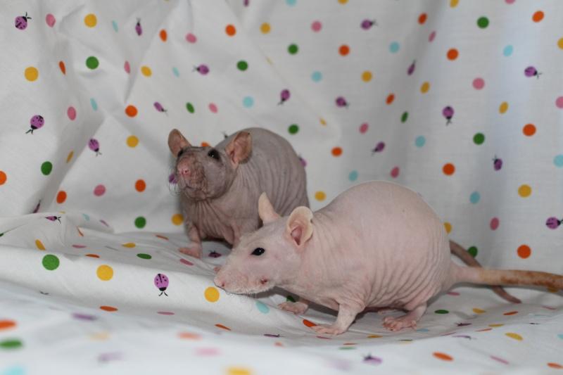Les ratons de Random Img_9511