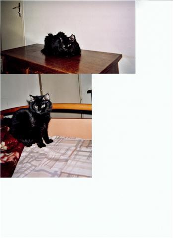 URGENCE pour 2 chattes La Seyne sur mer 83 Amale_10