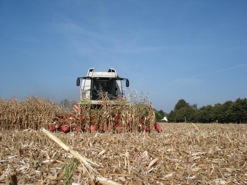 Moissons maïs 2009 Dsc05410