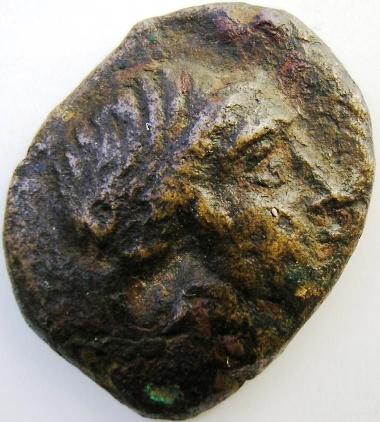 Lokris Opuntia - Epiknemidia bonce. Lokris10