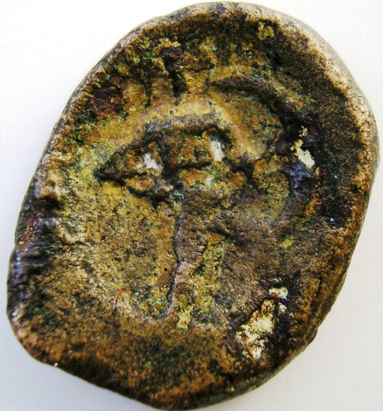 Lokris Opuntia - Epiknemidia bonce. Lokris11