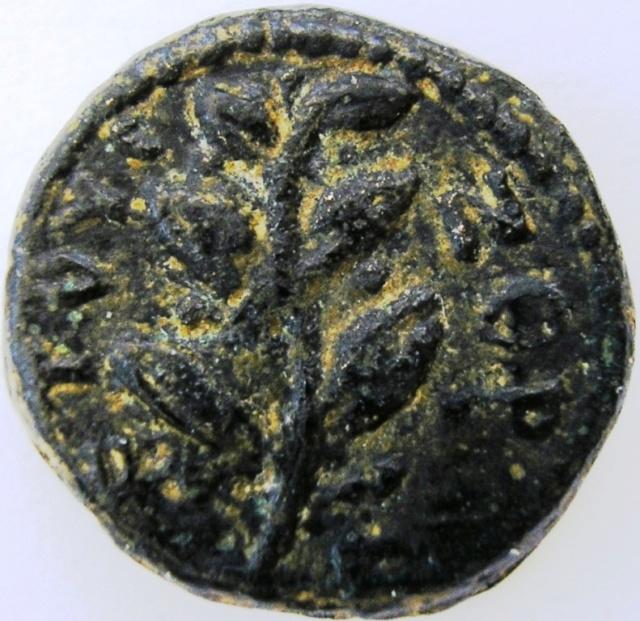 Seleukis . Pieria. Seleuk11