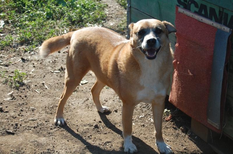 REXOU - mâle croisé, taille moyenne, né en 2009 - URGENCE, plus de 2 ans de refuge (CARMINA BUCAREST) - Adopté en Ecosse Rexou113
