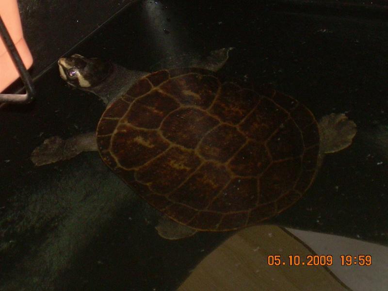 bassin d'intérieur pour tortues - Page 15 Dscn2063