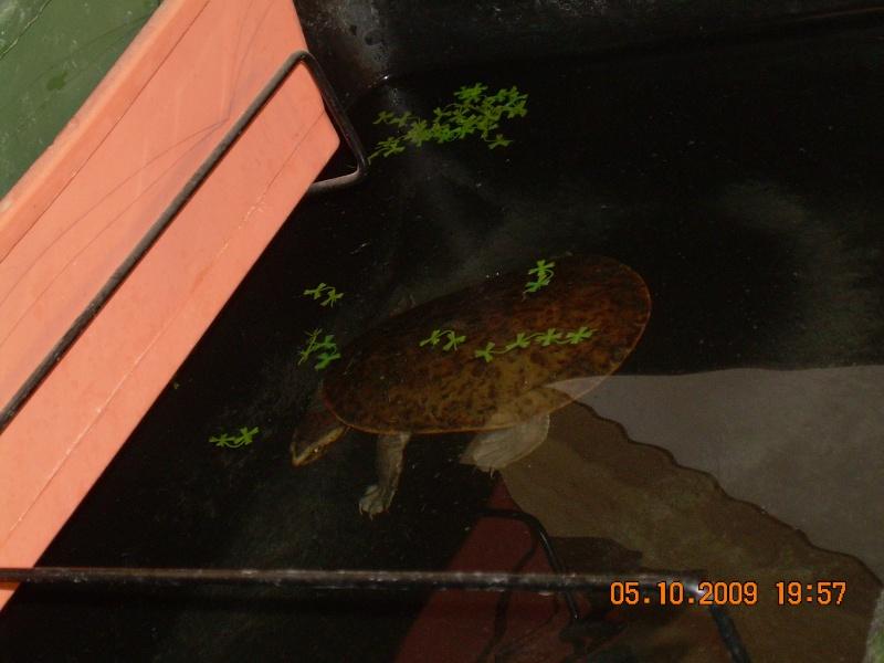 bassin d'intérieur pour tortues - Page 15 Dscn2065