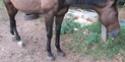BAMBOLO - PS né en 1995 -  adopté en août 2009 par Agnès-p  Img_0214