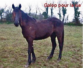 TRAPPEUR - TF né en 2007 - adopté en septembre 2009 par Antoine Trappe11