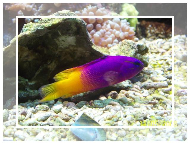 fil aquarium 101_5112