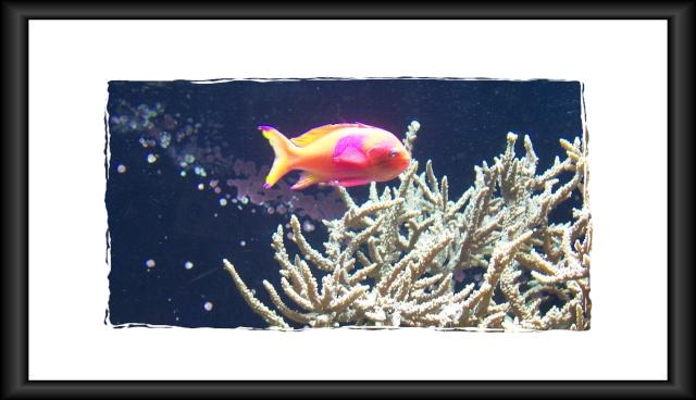 fil aquarium 101_5113