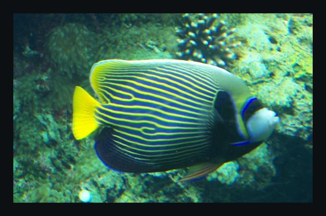 fil aquarium 101_5114