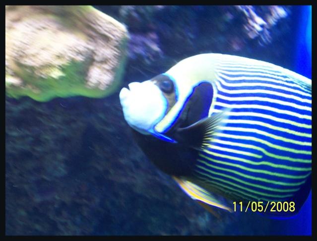 fil aquarium 101_5115