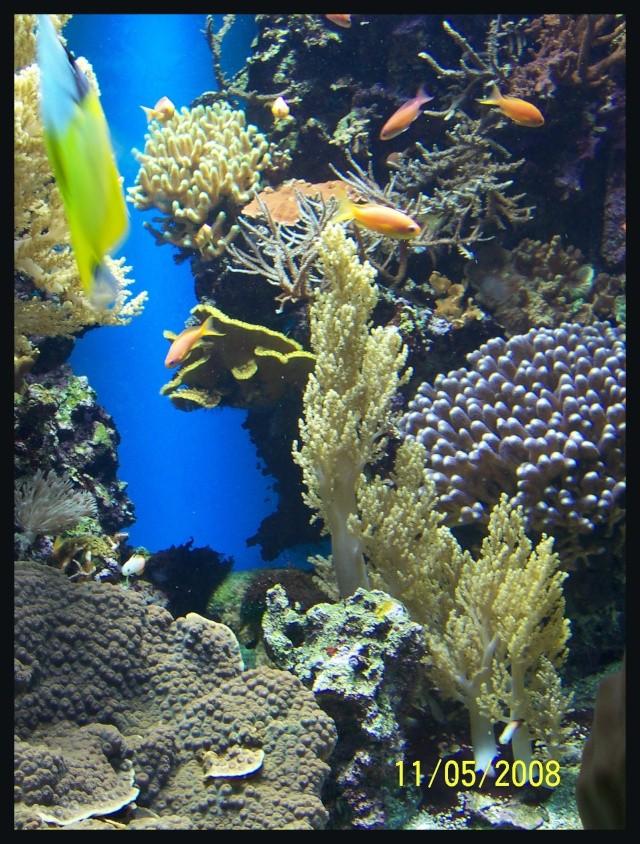 fil aquarium 101_5211
