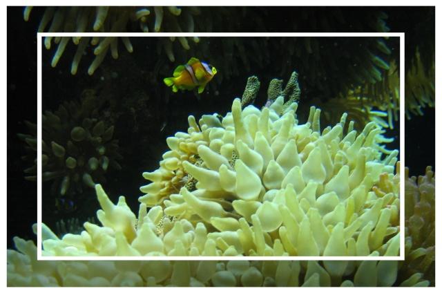 fil aquarium Img_0010