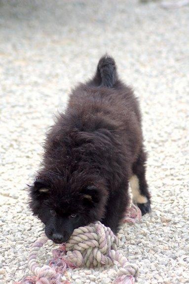 Nos loups grandissent, postez nous vos photos 11sem010