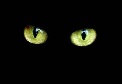 les chats noirs 20976510