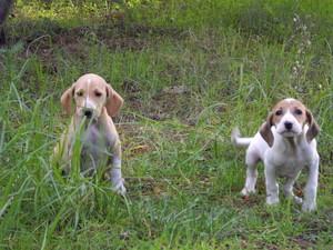 Nous sommes deux femelles de 2mois Cache_12