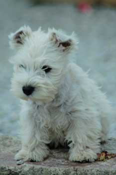 """Concours de la photo de chiens la plus """"belle"""" Droopy10"""